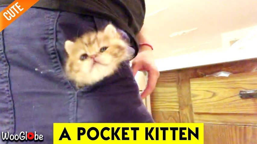 'SUPER ADORABLE Kitten Loves Staying in her Owner's Pocket'