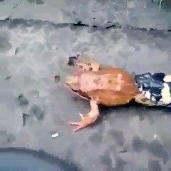 Snake VS Frog 2021 New video