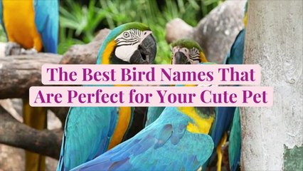 The Best 50 Bird Names That Are Perfect for Your Cute Pet