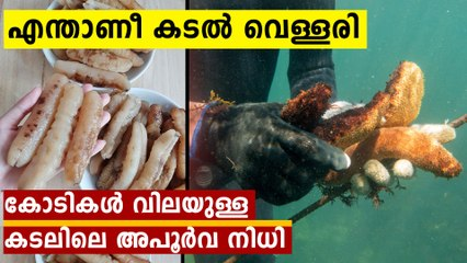 What Is a Sea Cucumber?; Why Sea Cucumbers Are So Expensive ?