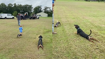 'Cute daddy/son reunion upstaged by silly dog dragging herself across the ground'