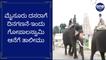 ಮೈಸೂರು ದಸರಾಗೆ ದಿನಗಣನೆ-ಇಂದು ಗೋಪಾಲಸ್ವಾಮಿ ಆನೆಗೆ ತಾಲೀಮು | Oneindia Kannada