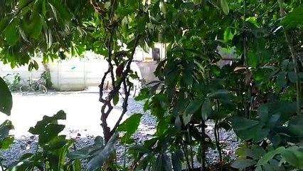 Vecinos denuncian contaminación sónica por megafiestas en local de Puerto Viejo