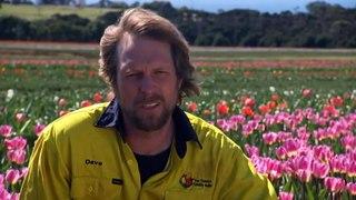 Demand for bulbs from Tasmanian tulip farm skyrockets