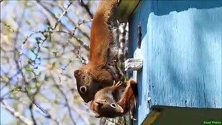 Cette maman écureuil a du mal avec son bébé qui ne l'écoute pas