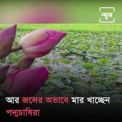 Lotus Farmers Reporting A Major Crop Failure
