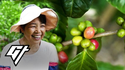 This Is the Only Coffee Farm in Hong Kong