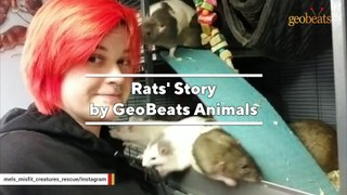 This woman rescues pregnant rats