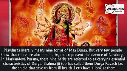 9 Herbs for Navratri