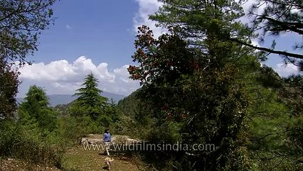 Rupin Dang talking about Rhododendron trees at Wilderness Films' Himalayan estate