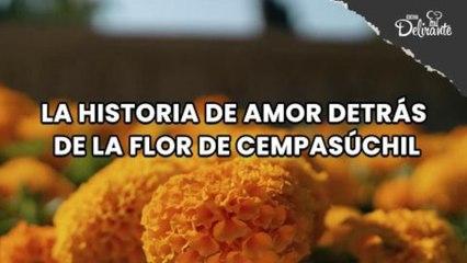 La historia de AMOR detrás de la flor de Cempasúchil.| Cocina Delirante