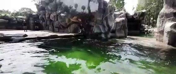 Zoológico La Aurora presenta a dos nuevos habitantes
