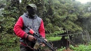 Why armed vigilantes are patrolling avocado farms in Mexico