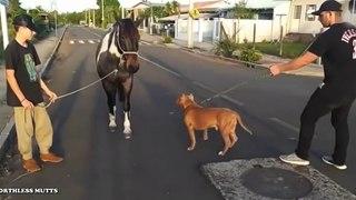 Ce débile présente un cheval à son chien... oups