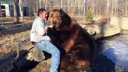 Un homme fait des câlins à un ours de 700 kg