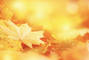 Why You Don't Need To Rake Your Leaves This Autumn