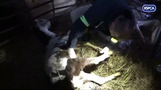 More than 200 animals were kept in vile conditions in the
