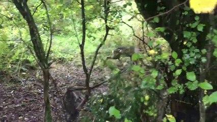 RSPCA deer rescue