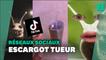 À cause de TikTok, vous ne verrez plus les escargots de la même façon
