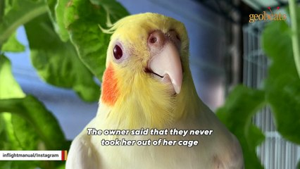 Rejected parrot just wants to be everyone's friend