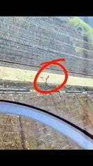 Un pilote d'hélicoptère aide un agriculteur à balayée une allée !