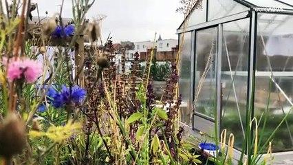 Bruxelles : un jardin sur les toits pour renforcer l'autonomie alimentaire