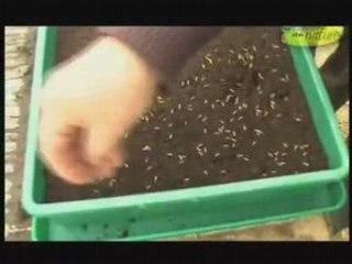 Visionnez les Cours Vidéo de Comment faire un semis dans une terrine