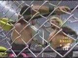 WCW - nWo Hollywood vs nWo Wolfpack vs Team DDP (part 1)