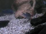 bon appetit petits poissons