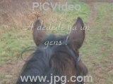Journee avec les filles et les chevaux!