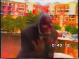 Mangobo et Koko dia  Nzombo dans le Mari Menteur 3