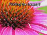 Ultimate Abundance - Ultimate Life