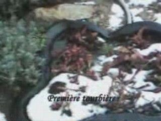 Visite des tourbières d'Arthurcarni 24 Mars 2008...