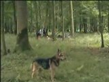 Rando dans la forêt de Mormal