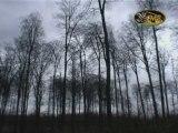 Tempête en Forêt de Soignes