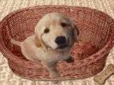 Le_chien_ki_parl de http://bounty12345.skyrock.com