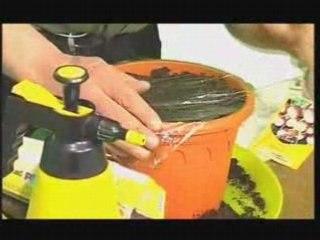 Visionnez les Cours Vidéo de Radis en Int�rieur  - Conseil Jardinage