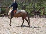 équitation éthologique : monter à cheval