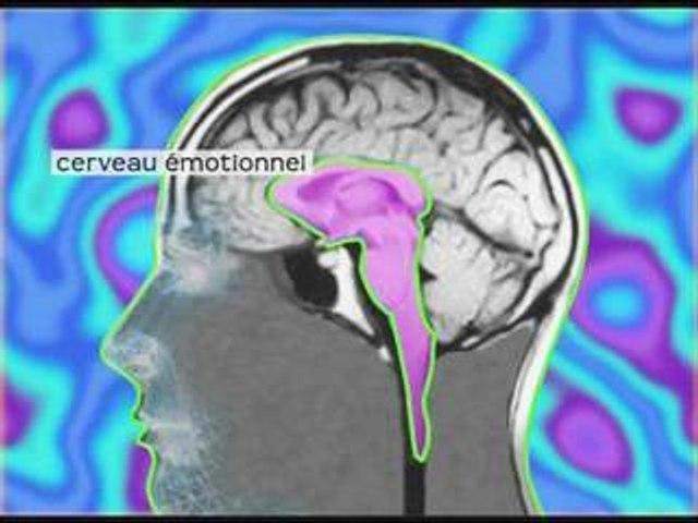 David Servan-Schreiber - Le cerveau emotionnel