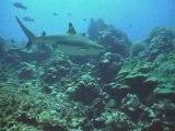 Raiatea - Diving at Miri Miri & Landscapes