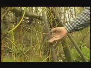 Visionnez les Cours Vidéo de Topinambour  - Conseil Jardinage