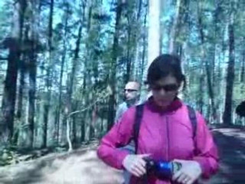 El bosque de Ibarrola II