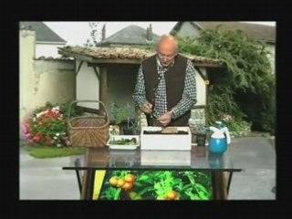 Repiquage Tomates - Cours de jardinage