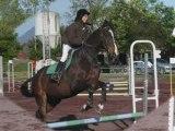 chevaux qui saute