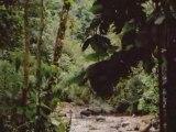 GUADELOUPE 01 2005