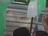asse-lille début du match drapeau green angels 4
