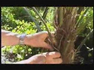 Visionnez les Cours Vidéo de Chamaerops - Cours de jardinage
