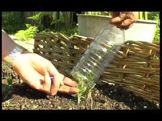 Visionnez les Cours Vidéo de La lavande - Cours de jardinage