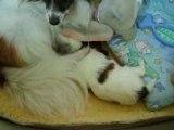 BB joue attaque Dumbo puis s'endort sur Angie