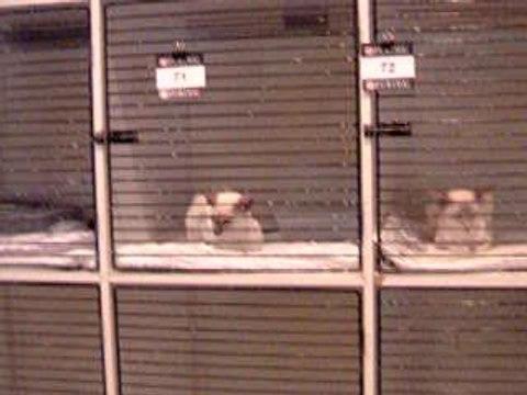 2004-04-04_0944.52_Showcats